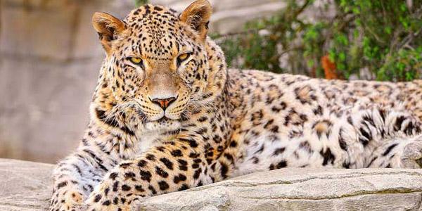 Shoolpaneshwar-Wild-Life-Sanctuary-img